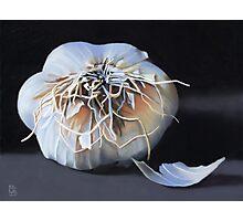Garlic Bulb fine art painting Photographic Print