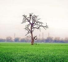 Lush by Atif Hussain