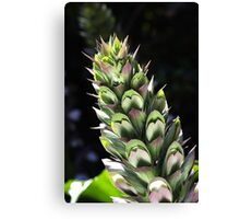 Oyster Plant  Canvas Print