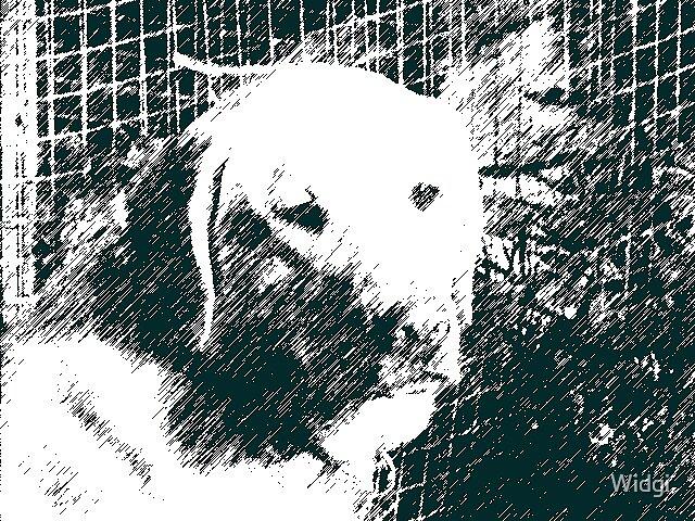 dog by Widgi