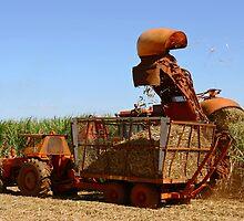 Harvesting by Darren Stones