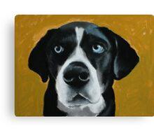 Seamus - a dog Canvas Print