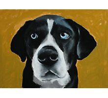 Seamus - a dog Photographic Print