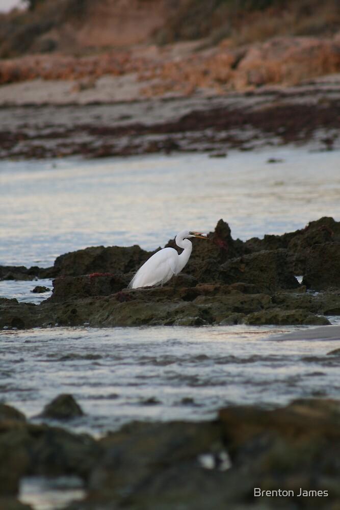 Egret on the rocks by Brenton James
