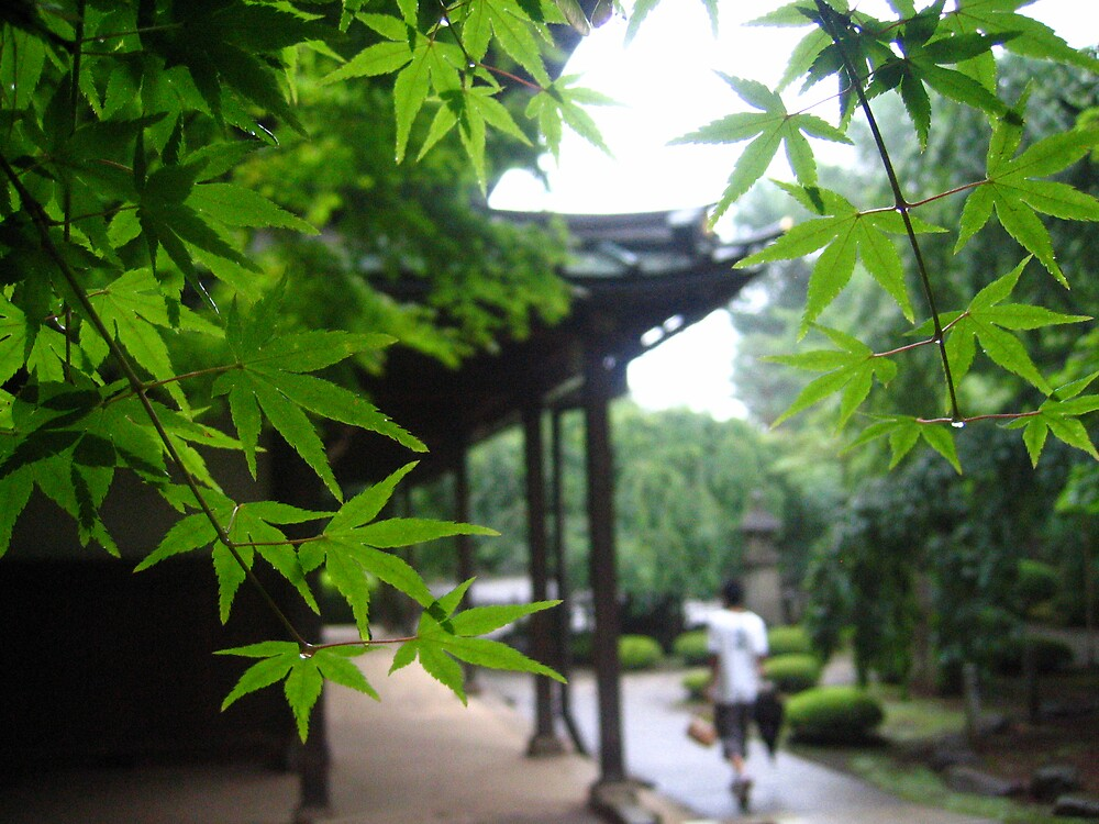 Gotokuji Temple leaves by Sally Li