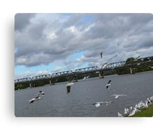 Seagulls on the Manning River Taree. Canvas Print