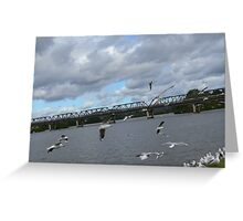 Seagulls on the Manning River Taree. Greeting Card