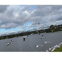 Seagulls on the Manning River Taree. Photographic Print