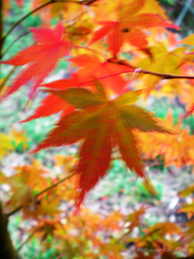 Blurred Maple by Katherine Kakafikas