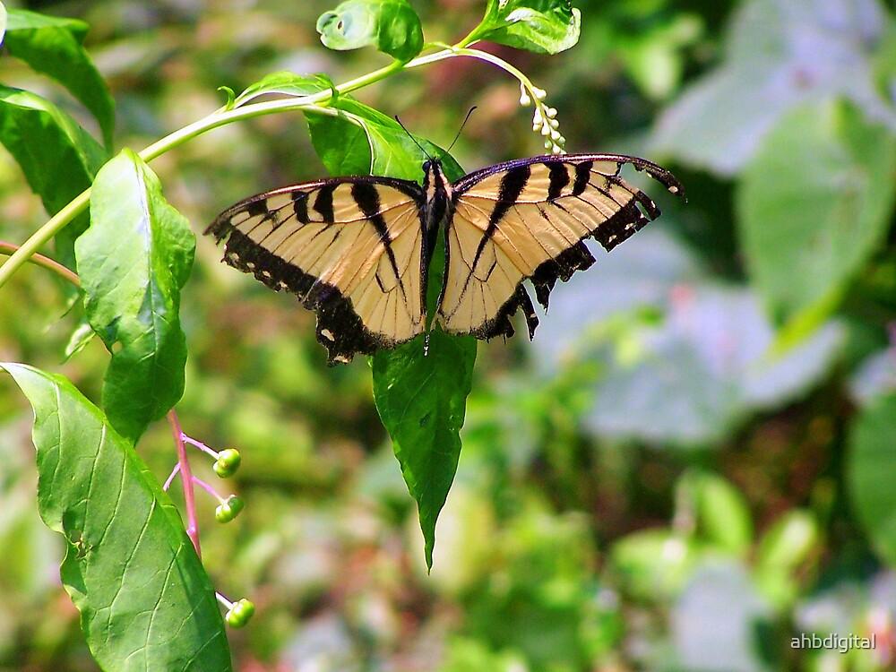 Butterfly by ahbdigital