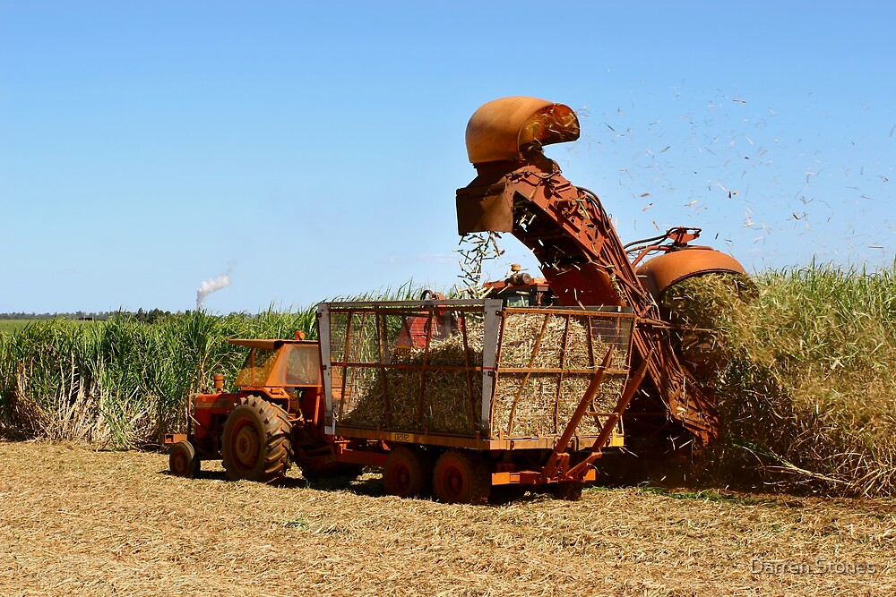 Harvesting at Bundaberg by Darren Stones