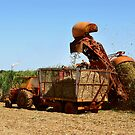 Harvesting at Bundaberg by Darren Stones