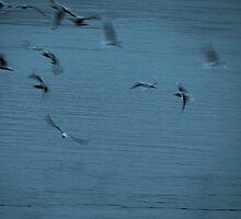 Birds by Carlos Contreras