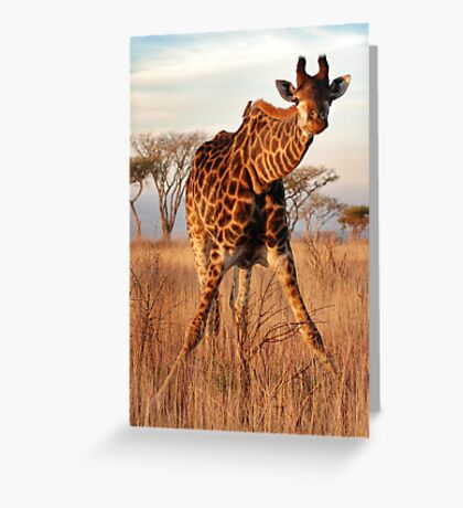 Doing the splits. Greeting Card