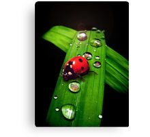 Green & Red Canvas Print