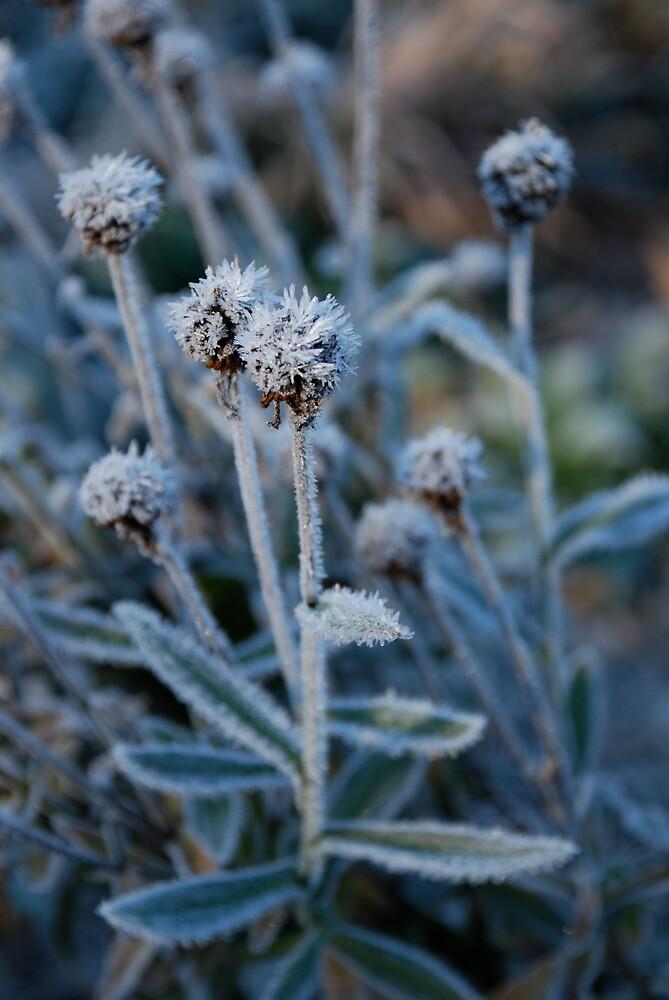 Frost1 by Hazel Wallace