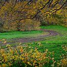 Autumn Road by farmboy