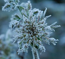 Frost 3 by Hazel Wallace