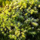 Miniature Forest #1 by farmboy