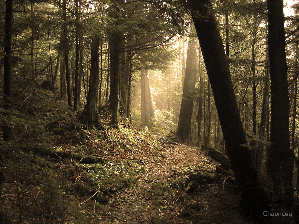 Quiet Path by Chauncey