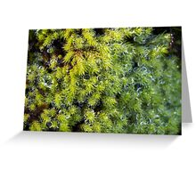 Miniature Forest #4 Greeting Card