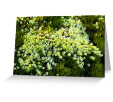 Miniature Forest #6 Greeting Card