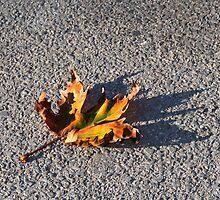 Fallen by Cathie Tranent