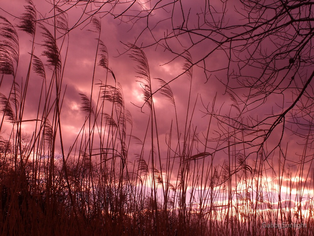 See the light by GabbySunlight