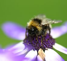Tea Time for Mr Bee by Justine Humphries