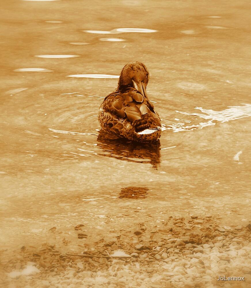 Duck & Ripple by JoLennox