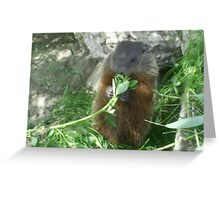 mommy groundhog eating leaves stem Greeting Card