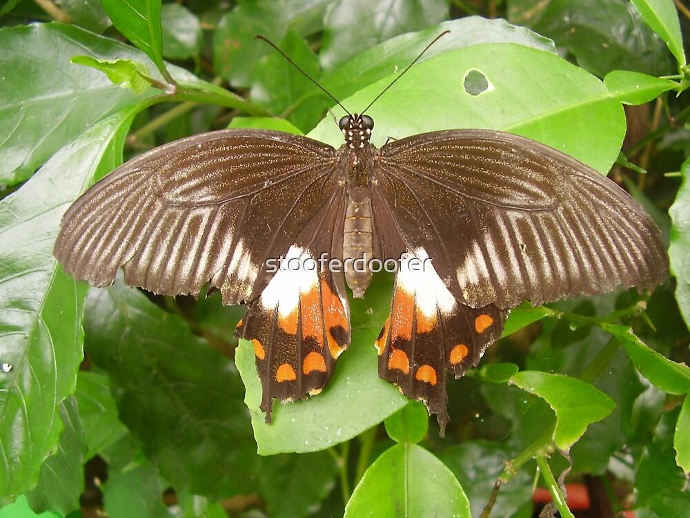 Butterfly by stooferdoofer