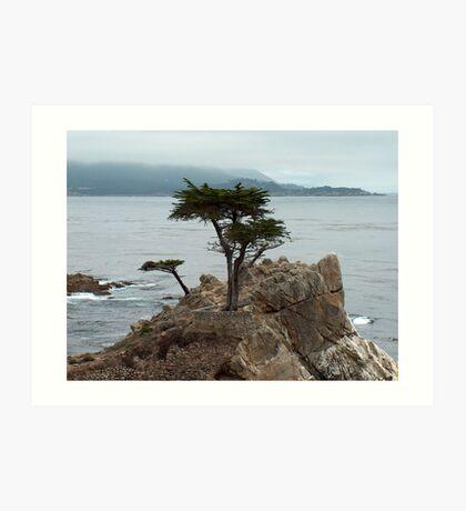 lone cypress tree Art Print