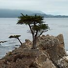 lone cypress tree by samc352