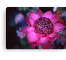The power of the lotus Canvas Print
