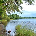 Lake Of Menteith by Stuart  Fellowes