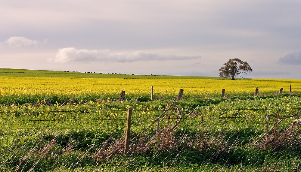 Fields of Yellow I by samg