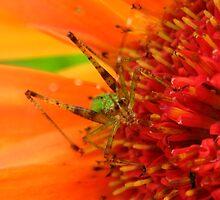 Grasshopper by kimber2