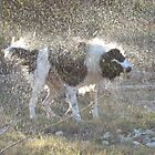 Wet Dog by EmmaLeigh