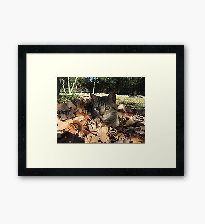 Playing in Leaves Framed Print