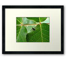 Fruit Fly Framed Print