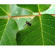 Fruit Fly Photographic Print