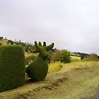 Tasmania - Along The Road - Hedge Animal by tmac