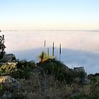 Fog Blanket - Mount Barker by Leeo