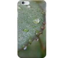 Morning Dew (1) iPhone Case/Skin