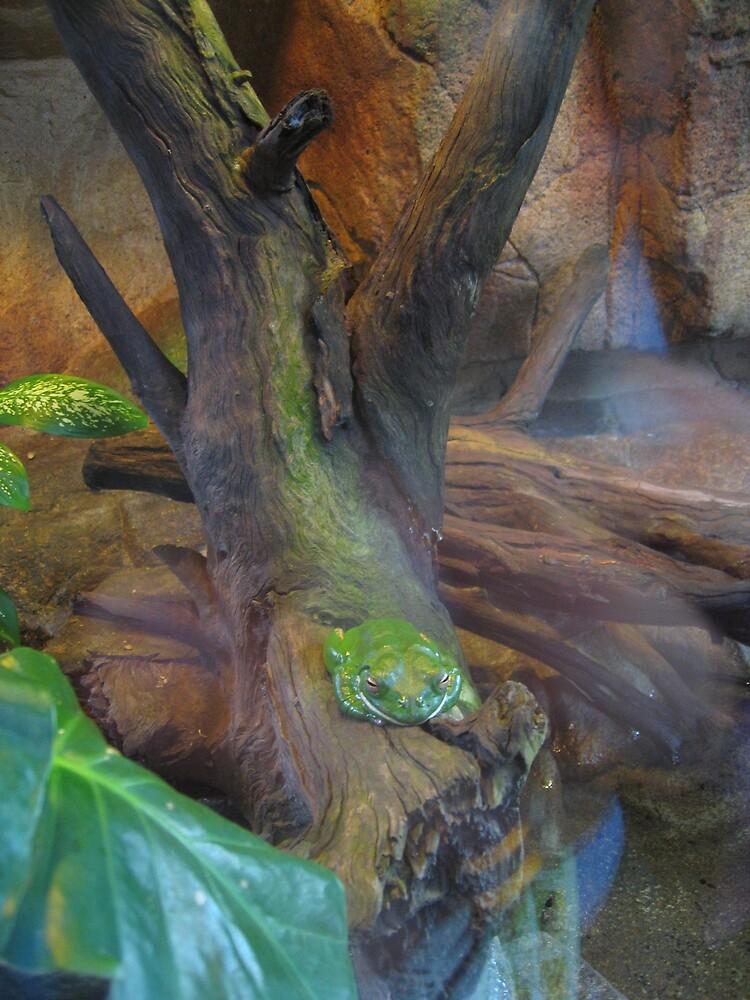 Green Tree Frog by Liz Cooper