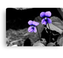 Fatal Violets Canvas Print
