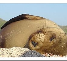 Galapagos Baby Sea Lion by caylow