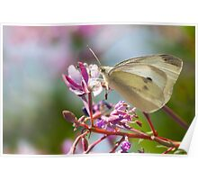 Small White Butterfly Poster