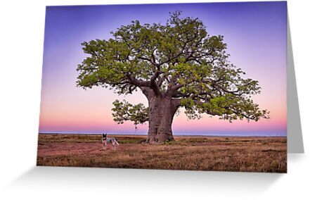 One Mile Dinner Camp Tree - Kimberley WA by Ian English